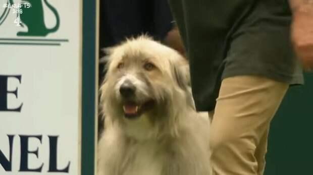 Эта собака на курсах дрессировки делает всё что ей в голову взбредёт дрессировка, дрессировка собак, забавное видео, и такое бывает, собака, собака - друг человека, собака видео, умора