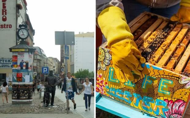 Жители города открыли необычные отели: их посетители жужжат и делают мед