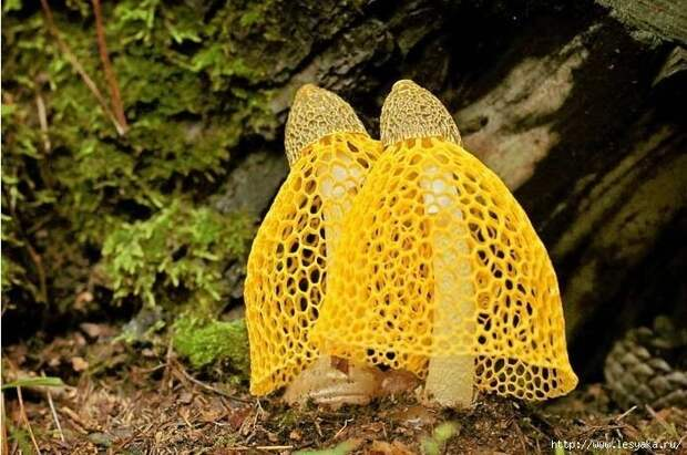 30 самых удивительных и красивых в мире грибов: фотографии и интересные факты!