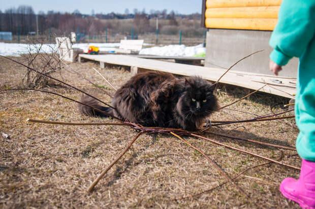Плетеный из веточек домик для кота DIY