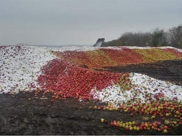 «Молдавских яблонь негасимый цвет»: в Белграде праздник, грустен Кишинев