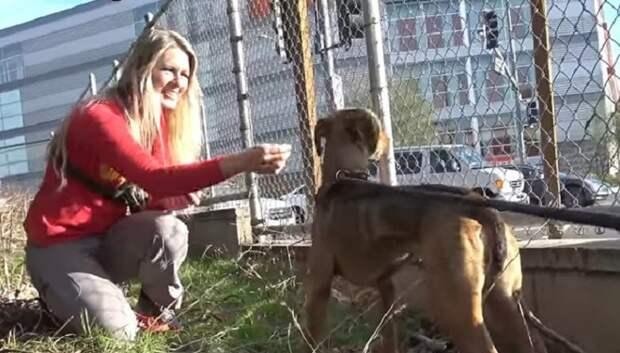 Собака и волонтер