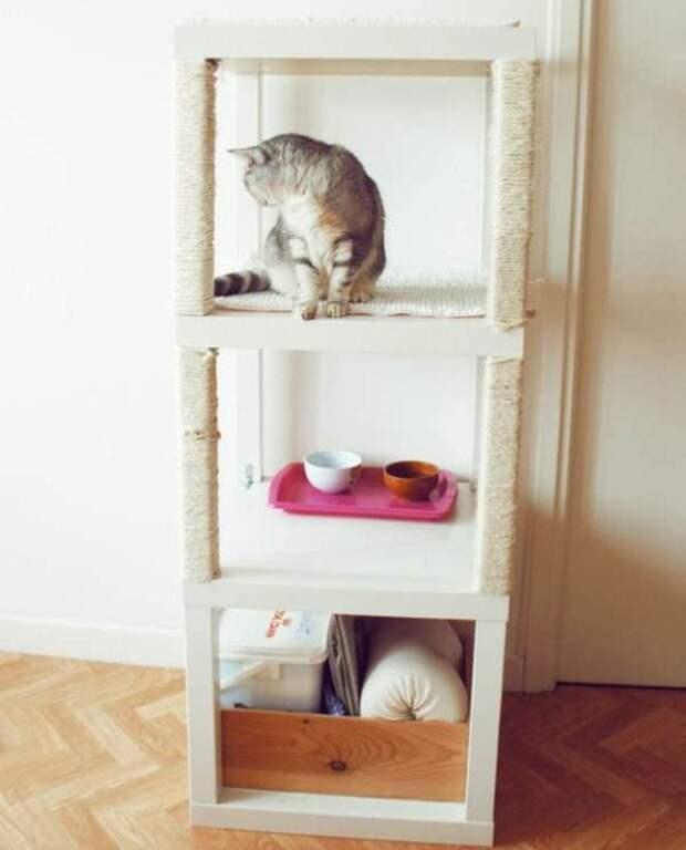 Дельные советы для владельцев кошек