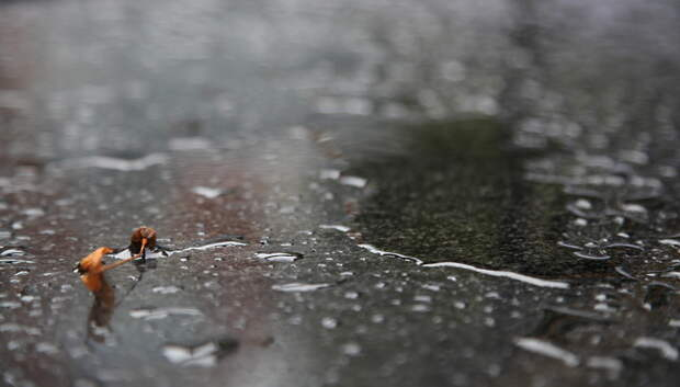 Дождь в Московском регионе прекратится после полуночи