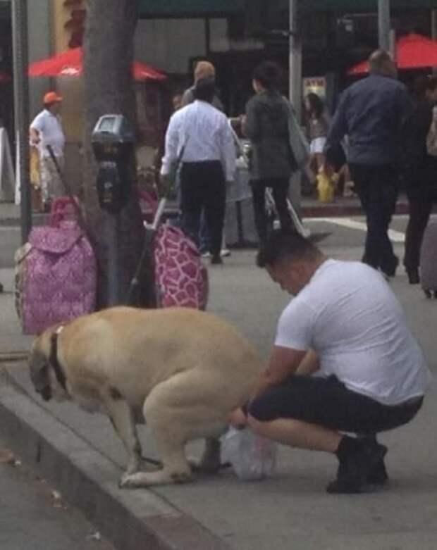 Есть хорошие собачники, которые убирают какашии за своими питомцами животные, картинки, прикол, собаки, собачники, фото, юмор