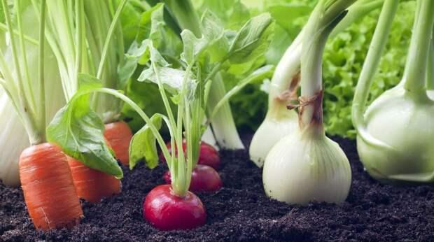 Чем заняться дома: выращиваем зелень и овощи на подоконнике и на балконе