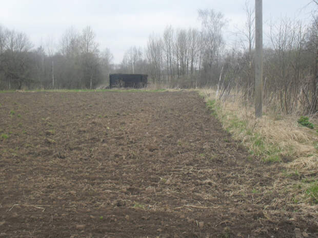 Разработал брошенный , заросший борщевиком и деревьями участок, сразу объявились хозяева)))