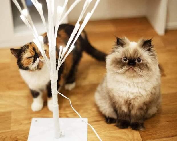 Хотя в жизни они, наверняка, мурчащие милашки. Но эти взгляды! животные, кот, милота, мимика, морда, ненависть