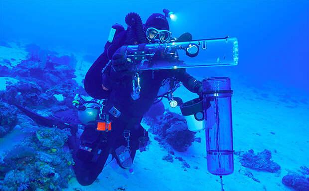 Ученые обнаружили неизвестные ранее виды рыб