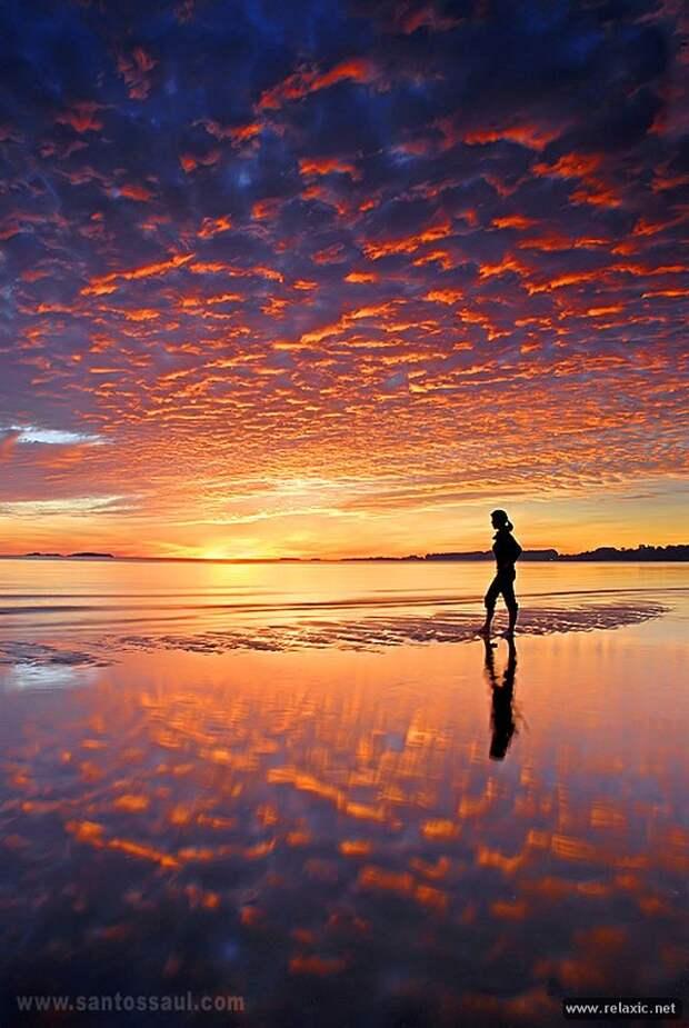 Мир природы Сола Сантоса Диаза (60 фото)