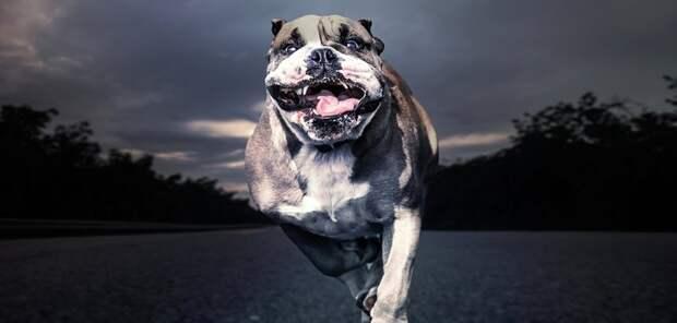 Если на тебя напала собака: 3 способа грамотной защиты