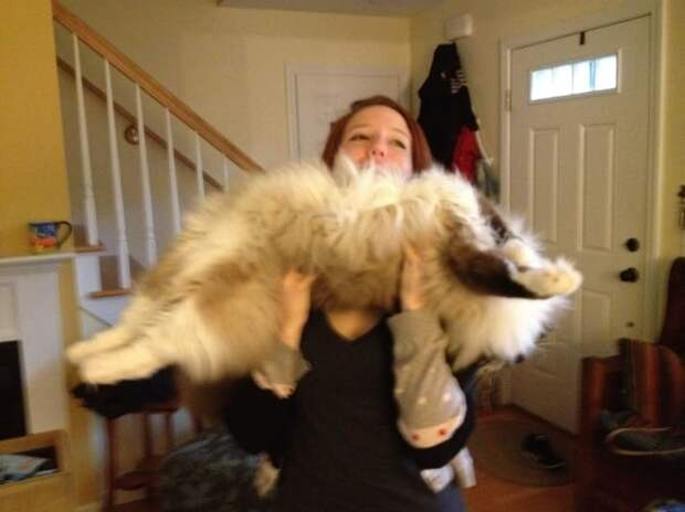 Кот-гимнаст животные, кошки, фото