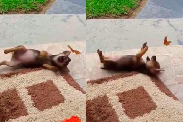 Игра щенка ибабочки очаровала пользователей Сети