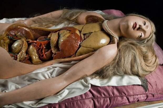 Восковые Венеры — жуткая красота конца XVIII века.