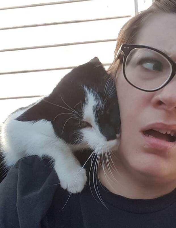 Уличный кот запрыгнул женщине на спину. Она и подумать не могла, что из этого выйдет