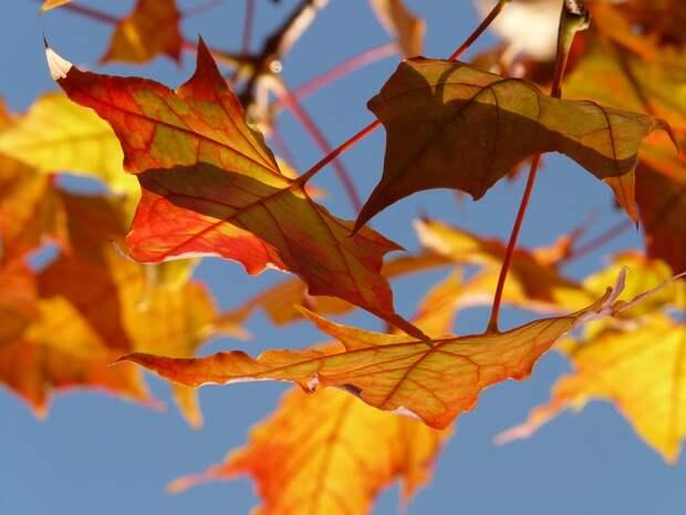 В Южнопортовом осенью высадят клены и пенсильванские ясени