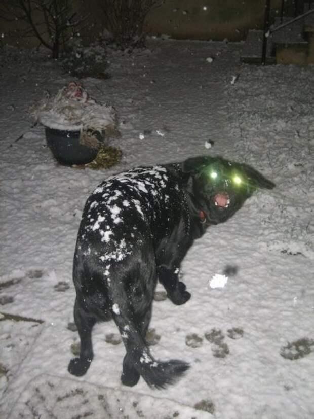18. Реакция на первый снег домашний питомец, животные, подборка, собака, фото, юмор
