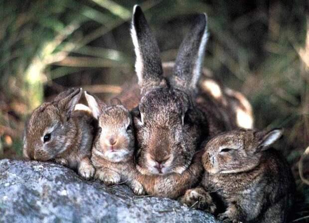 Зайчиха с зайчатами. Фото: сайт управы района Люблино ЮВАО