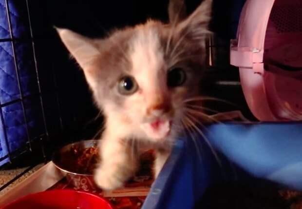 Парень спас кошечку из заброшенного дома. Он и подумать не мог, какой она станет через 5 лет