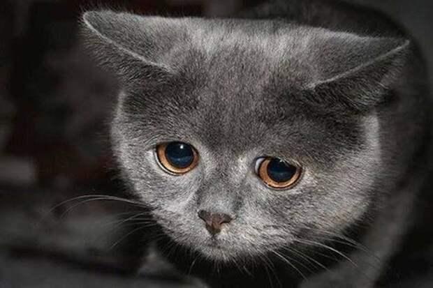 Эти животные расстроены из-за того, что не получили подарок животные, подарок