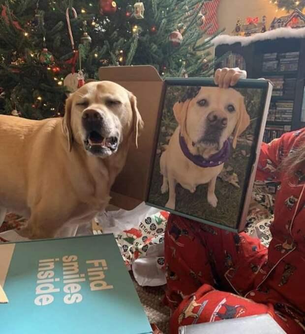 собака и ее портрет
