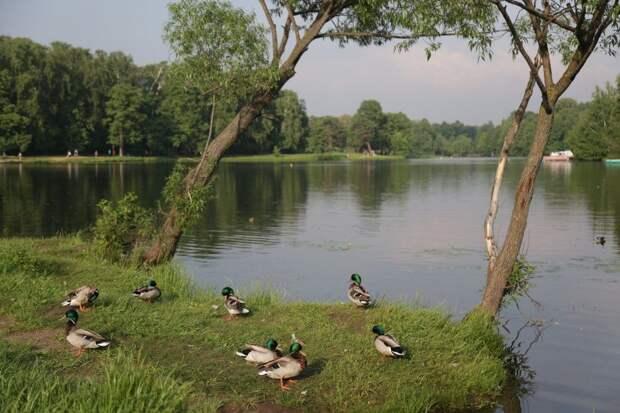 Роспотребнадзор запретил купаться в прудах Кузьминок