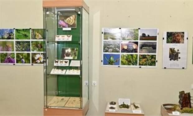 В краеведческом музее в Кирове открылась выставка уникальных насекомых