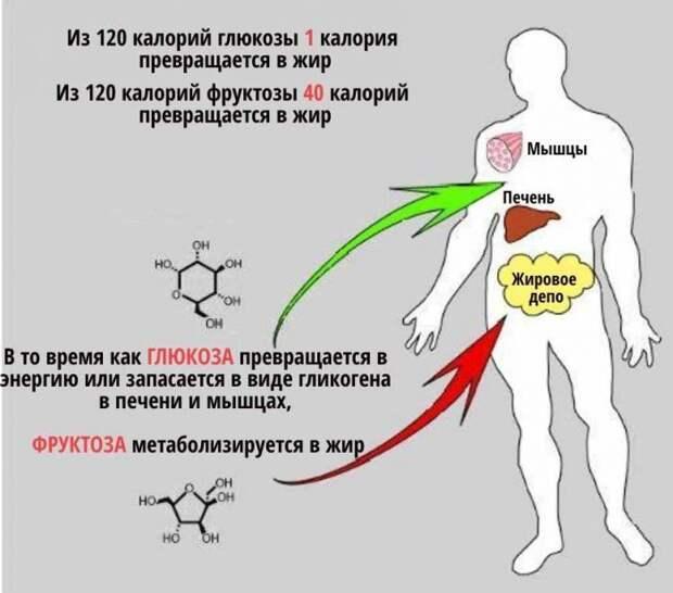 Как фруктоза приводит к диабету