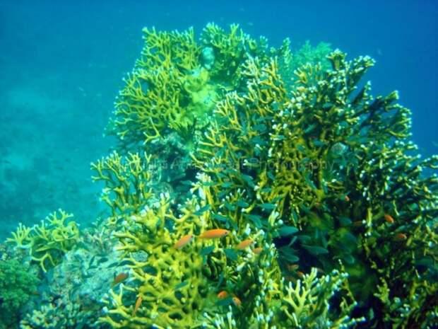 redsea03 10 фактов о Красном море