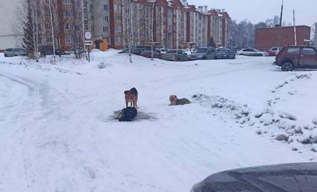 Зоозащитники обеспокоены массовым отравлением собак в Завьялово