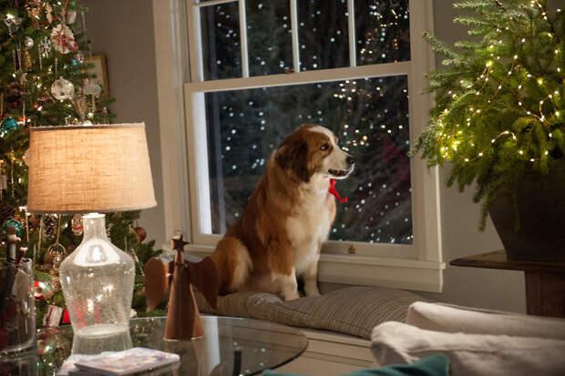 Топ 5 рождественских фильмов