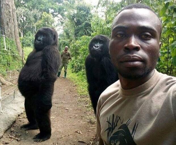 Снимок Матье и подопечных из центра спасения горилл облетел весь мир