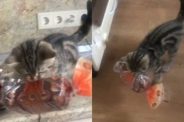 Наглый котёнок украл буханку хлеба на глазах у хозяев и покорил интернет