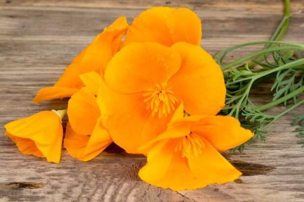 California poppy (Eschscholzia californica) orange flowers on a wooden