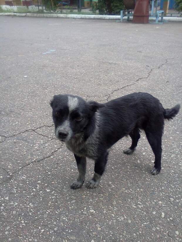 Лохматая душа Бусенька пряталась от людей… А теперь она самая любимая собака в мире!
