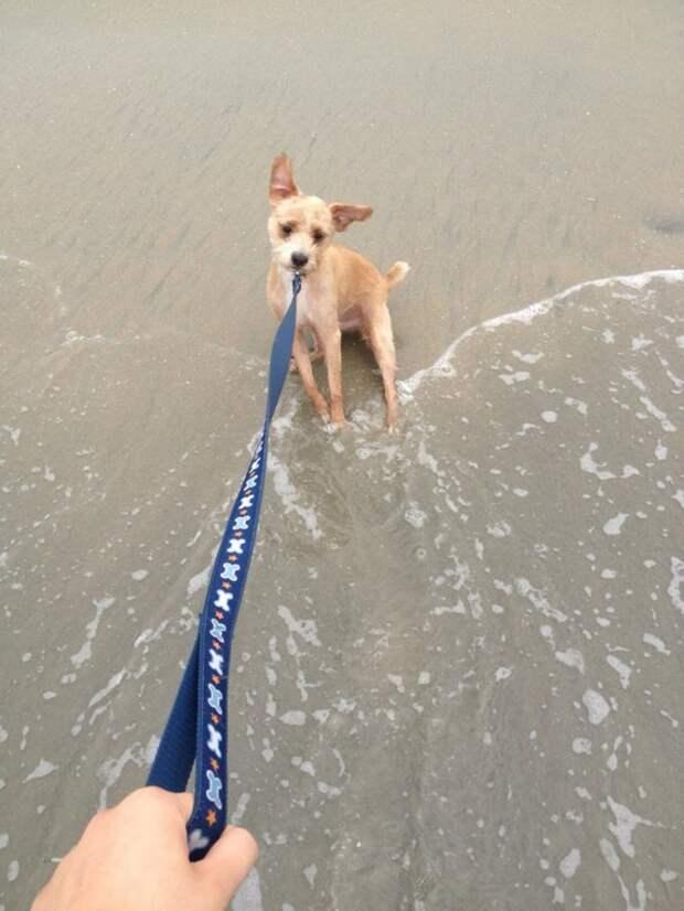 Неподдельные эмоции отважных собак, которые бояться самую обычную воду