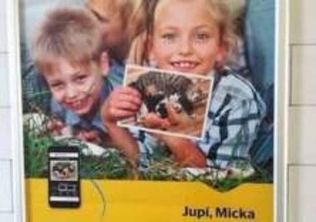 Активистов возмутило фото кошек на рекламе Чешской почты