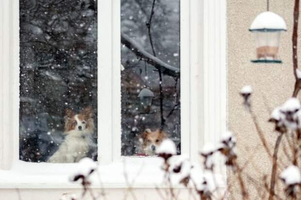 Когда ждать первый снег в Тверской области
