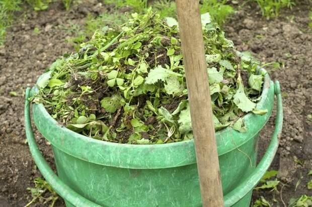 Какие растения-сорняки подходят для подкормки?