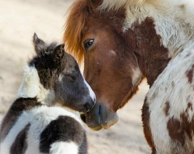 4. Мама и ребенок - это так мимимишно