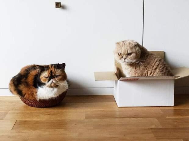 А ещё в их доброжелательной семейке есть Меме животные, кот, милота, мимика, морда, ненависть