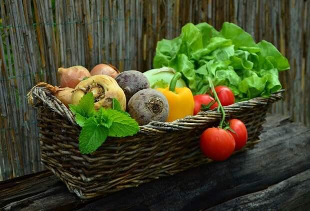Овощи, Овощная Корзина, Урожай, Сад, Салат, Есть