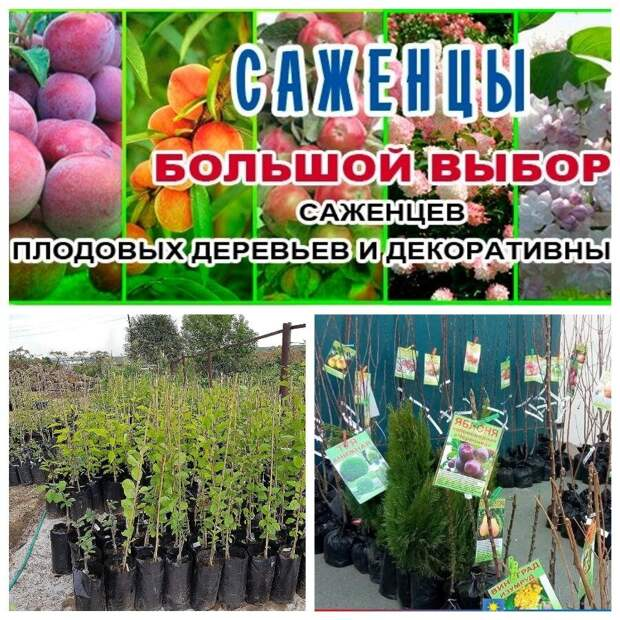 Выбираем плодовые растения для сада. Сейчас самое время этим заняться, весной будет уже поздно