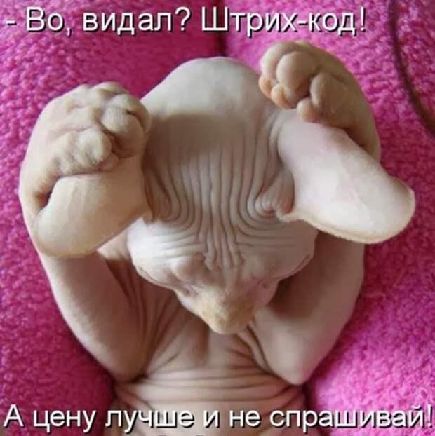 9371f4d6e64e330efd586a543d8_prev