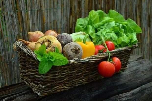 Диетолог назвала овощи, полезные для укрепления иммунитета осенью