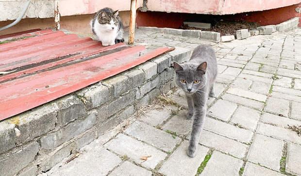 Умирающая отрака хозяйка приюта раздает кошек исобак вНижнем Новгороде