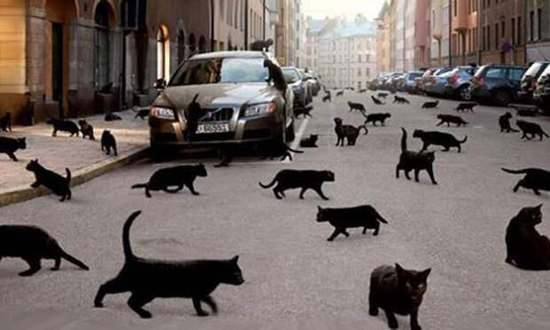 Черные кошки: хорошие, плохие и непонятые. Мифы и реальность