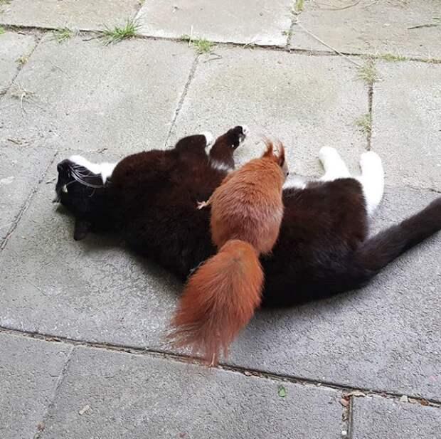 Кошка нежно прижимала к себе раненого бельчонка… История 3-х усатых друзей, полная счастливой любви!
