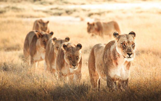 25 трогательных фото животных, вызывающие умиление, улыбку и страх