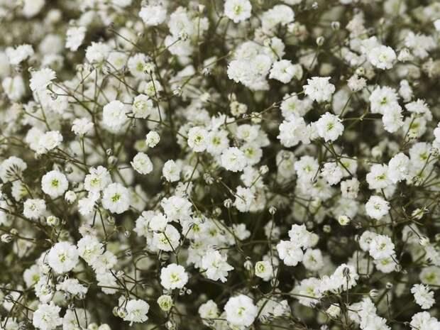Красивые и опасные: худшие растения для людей, страдающих от аллергии